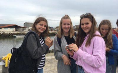 Zwölf Austern mit Charme